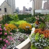 Bernardin Rooftop in Summer