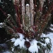 Birch logs in Winter Urn