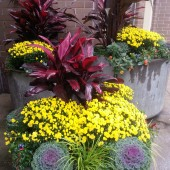 Fall Commercial Planters