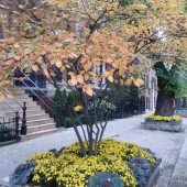 Fall Residential Parkways