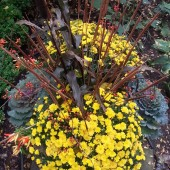 Fall Urn inLincoln Park
