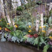 Lincoln Park Winter Displays