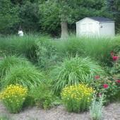 Ornamental Grasses and More
