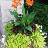 Simple Canna Container