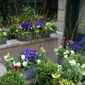 Spring in Lincoln Park