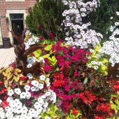 Summer Containers Gone Wild!